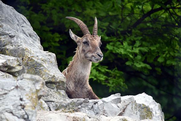 Nr. 6310 / 2015 / Tierpark Langenberg / 6016 x 4016 / JPG-Datei