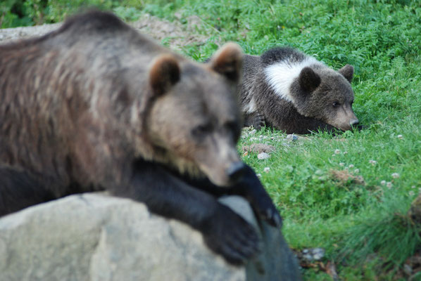 Nr. 6305 / 29.07.2009 / Tierpark Langenberg / 3872 x 2592 / JPG-Datei