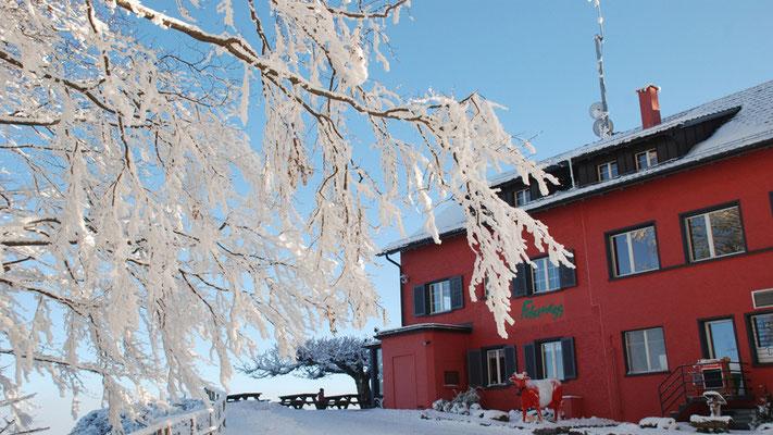Nr. 301 / 11.01.09 / Albis Felsenegg Restaurant / 3872 x 2592 / JPG-Datei / NEF File