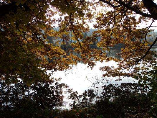 Nr. 266 / 30.10.2011 / Halbinsel Au, Wädenswil, Ausee, Blick Richtung Süden - West / 4000 x 3000 / JPG Datei