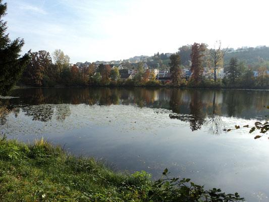 Nr. 265 / 30.10.2011 / Halbinsel Au, Wädenswil, Ausee, Blick Richtung Süden - Ost / 4000 x 3000 / JPG Datei