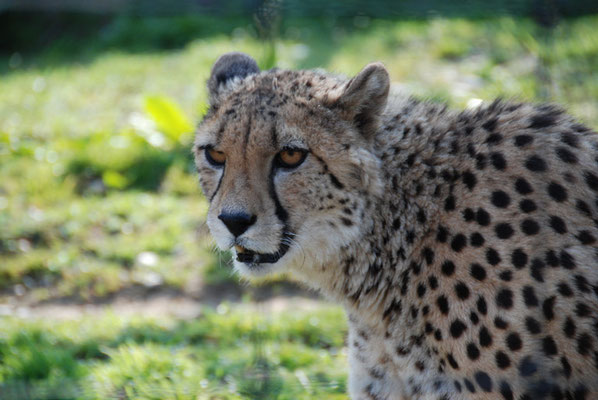 Nr. 6062 / 24.03.2012 / Basler Zoo / 3872 x 2592 / JPG-Datei