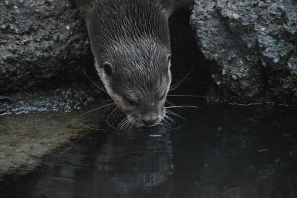 Nr. 6024 / 26.12.2012 / Zoo Zürich / 6000 x 4000 / JPG-Datei