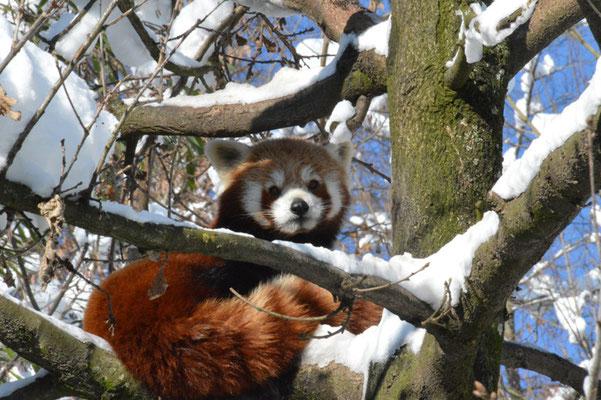 Nr. 6019 / 10.02.2013 / Zoo Zürich / 6000 x 4000 / JPG-Datei