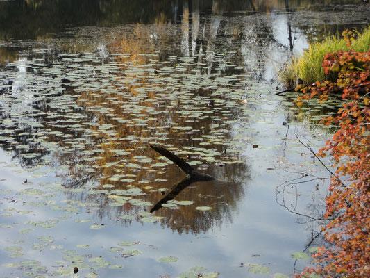 Nr. 261 / 30.10.2011 / Halbinsel Au, Wädenswil, Ausee, Blick Richtung Süden / 4000 x 3000 / JPG Datei