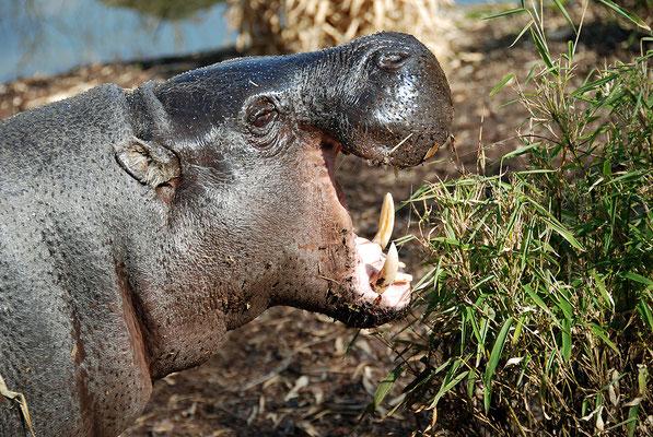 Nr. 6066 / 24.03.2012 / Basler Zoo / 3872 x 2592 / JPG-Datei