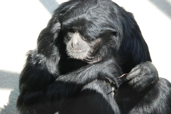Nr. 6030 / 27.02.2012 / Zoo Zürich / 3872 x 2592 / JPG-Datei
