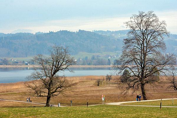 Nr. 5112 / Woche 12 / Pfäffiker-See, Blick von der Holxweid, Richtung Nord-Ost