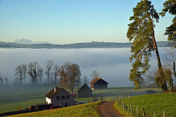 5152 / Woche 52 / Türli oberhalb Männedorf, Nebel über dem Zürichsee