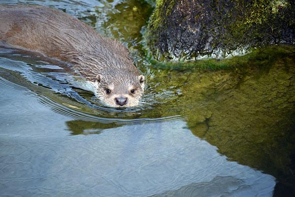 Nr. 6227 / 2016 / Tierpark Arth-Goldau / 6016 x 4016 / JPG-Datei