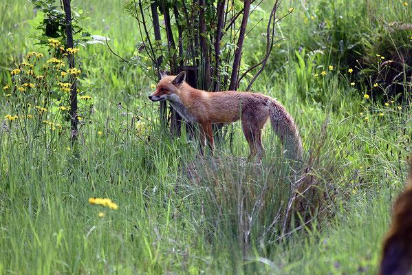 Nr. 6322 / 2015 / Tierpark Langenberg / 6016 x 4016 / JPG-Datei