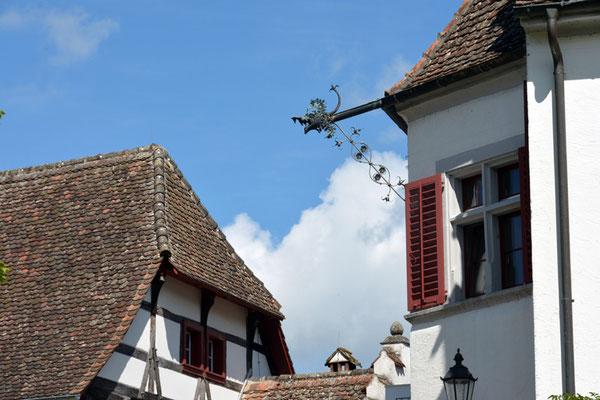 Nr. 3020 / 17.08.2014 / Kloster Rheinau / 6000 x 4000 / JPG-Datei