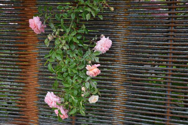 Nr. 141 / 29.05.2014 / Bremgarten /6000 x 4000 / JPG-Datei