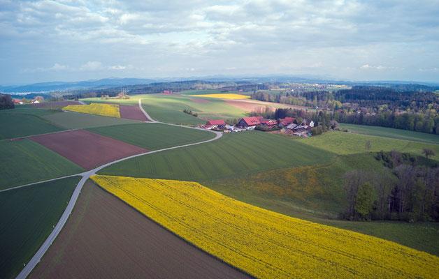 2019, Woche 19, Rapsfelder, Obere Wagenburg
