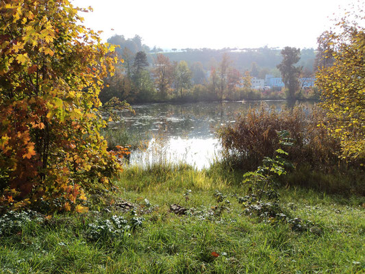 Nr. 267 / 30.10.2011 / Halbinsel Au, Wädenswil, Ausee, Blick Richtung Süden  / 4000 x 3000 / JPG Datei