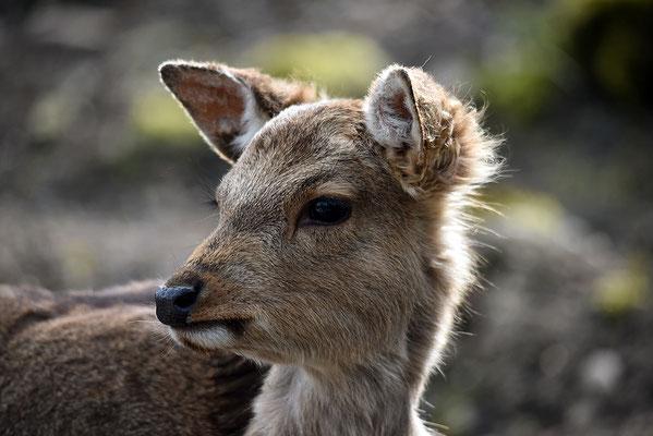 Nr. 6221 / 2016 / Tierpark Arth-Goldau / 6016 x 4016 / JPG-Datei