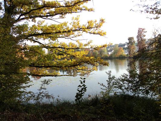 Nr. 263 / 30.10.2011 / Halbinsel Au, Wädenswil, Ausee, Blick Richtung Süden - Ost / 4000 x 3000 / JPG Datei