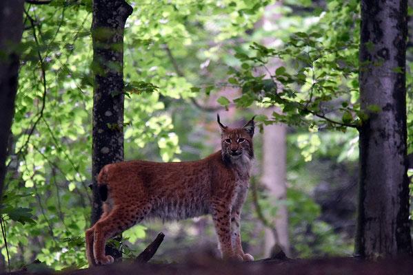 Nr. 6311 / 2015 / Tierpark Langenberg / 6016 x 4016 / JPG-Datei