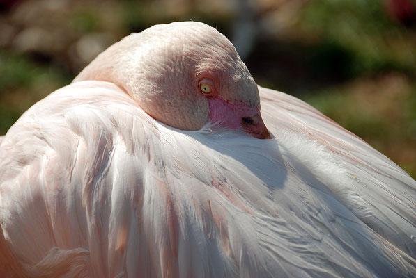 Nr. 6068 / 24.03.2012 / Basler Zoo / 3872 x 2592 / JPG-Datei