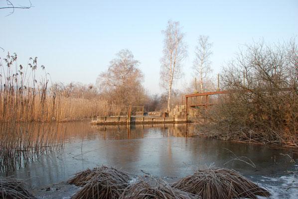 Nr. 248 / 22.02.12 / Glatt Auslauf Greifensee Schwerzenbach / 3872 x 2592 / JPG Datei