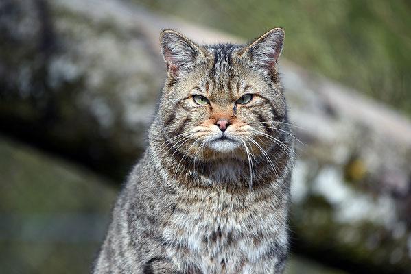 Nr. 6219 / 2016 / Tierpark Arth-Goldau / 6016 x 4016 / JPG-Datei