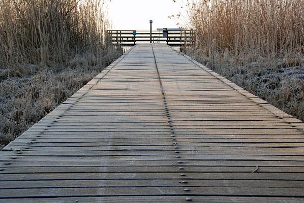 5309 / Woche 9 /  Holzsteg am Greifensee