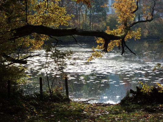 Nr. 268 / 30.10.2011 / Halbinsel Au, Wädenswil, Ausee, Blick Richtung Süden -West / 4000 x 3000 / JPG Datei