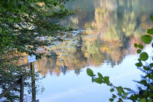 Nr. 246 / 19.10.2013 / Türlersee, Blick Richtung Nord / 6016 x 4000 / JPG Datei