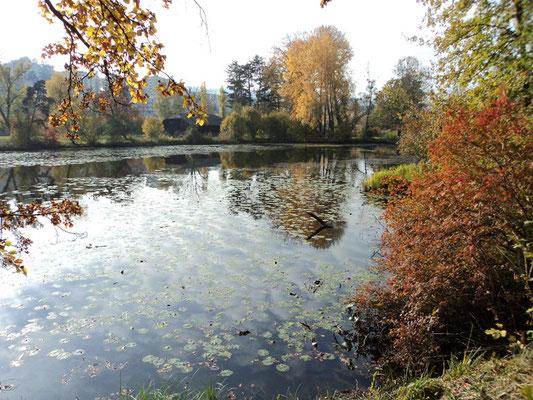 Nr. 260 / 30.10.2011 / Halbinsel Au, Wädenswil, Ausee, Blick Richtung Süden - West / 4000 x 3000 / JPG Datei