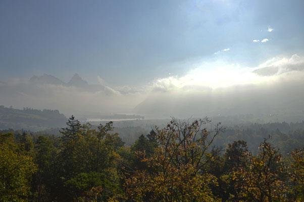5347 / Wochenbild, Nebelstimmung über dem Lauerzersee