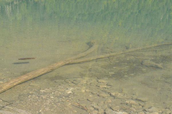 Nr. 216 / 08.09.12 / Klöntalersee, Spiegelung, Blick Richtung West / 6016 x 4000 / JPG-Datei