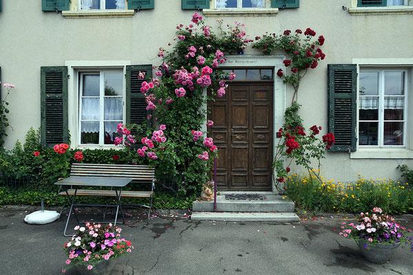 Nr. 131 / 13.06.2015 / Stein am Rhein/ 6016 x 4016 / JPG-Datei