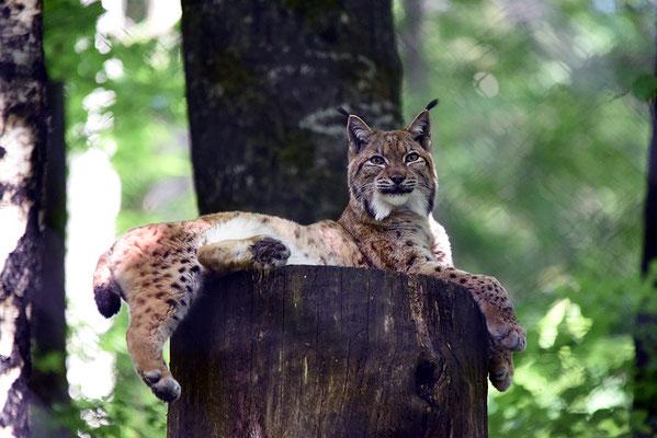 Nr. 6313 / 2015 / Tierpark Langenberg / 6016 x 4016 / JPG-Datei