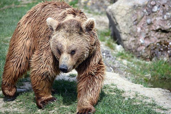 Nr. 6215 / 2016 / Tierpark Arth-Goldau / 6016 x 4016 / JPG-Datei