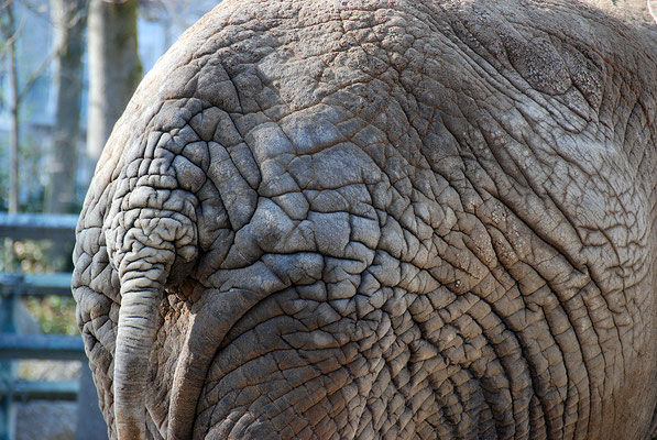 Nr. 6070 / 24.03.2012 / Basler Zoo / 3872 x 2592 / JPG-Datei