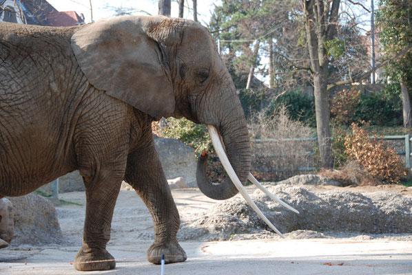 Nr. 6063 / 24.03.2012 / Basler Zoo / 3872 x 2592 / JPG-Datei