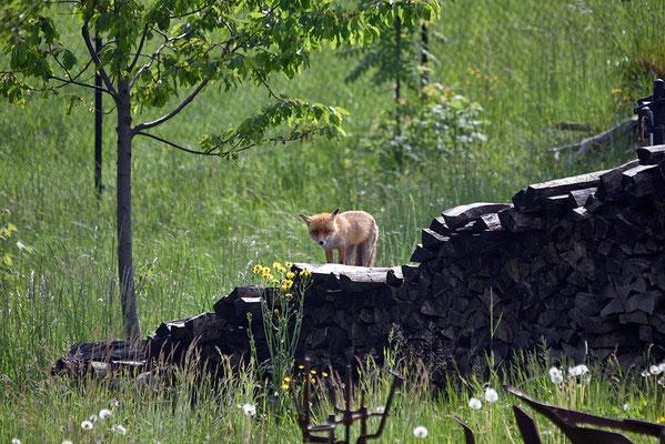 Nr. 6323 / 2015 / Tierpark Langenberg / 6016 x 4016 / JPG-Datei