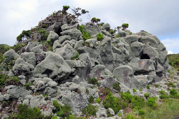 Immer wieder trifft man im Hochland auf Felsen die komplett mit Flechten überwuchert sind... es macht den Eindruck als wären sie mit Fell überzogen