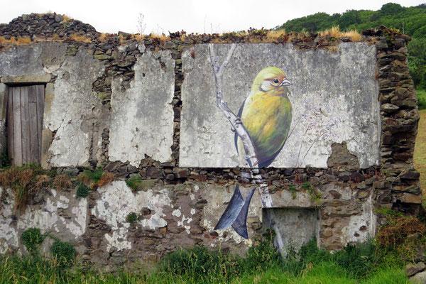 Fast alle endemischen Vögel (hier der Kanarengirlitz - Serinus canaria) findet man als Gemälde an Hauswänden, am Flughafen... von Flores