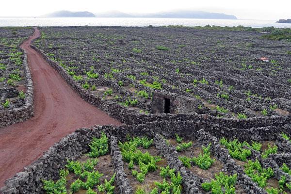 Hier wird Wein angebaut - ein UNESCO Welterbe ist die Zona das Adegas zwischen Lajido und Arcos