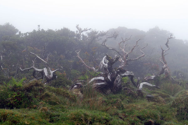 Manchmal kommt im Zentralen Hochland Picos der Nebel auf und taucht alles in eine wirklich zauberhafte Welt!