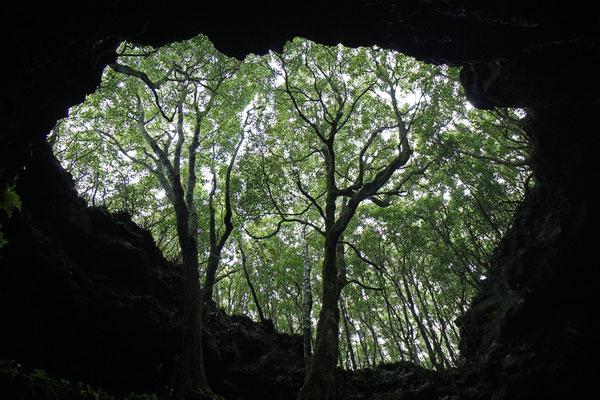 """Eine """"Lava-Tube"""". Das sind über 1000m lange Höhlen, aus denen ursprünglich Lava gequollen ist. Hier der ein Aus- bzw. Eingang der Gruta das Torres"""