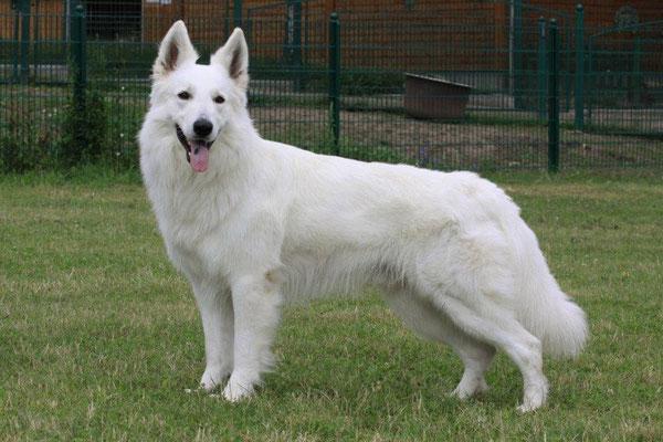 Legend of White Balou, Sohn von unserer Gladys und unserem Zeus