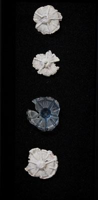 """Plexi-echinoderm""; 2017; ceramic, PET plastic, felt, frame; 15x7x2"