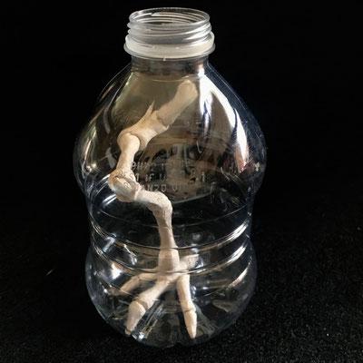 """Preserved #1"", 2019, 4.5 x 3 x 3, Ceramic, Plastic bottle"