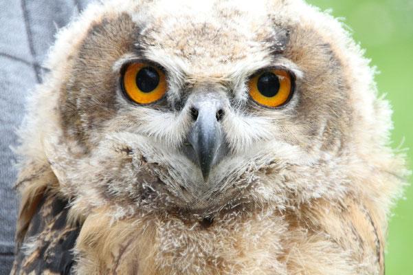 Schau mir in die Augen....         Foto: NABU / Borck