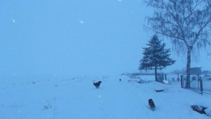 "Ausflug im Schneesturm ""Wahnsinn"