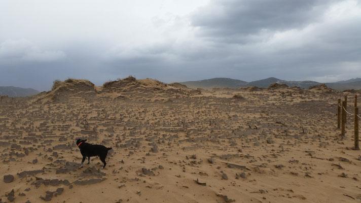 Dünen ohne Sand