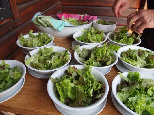 Eine grüne Gartensalatvariation aus dem eigenen Hochbeet