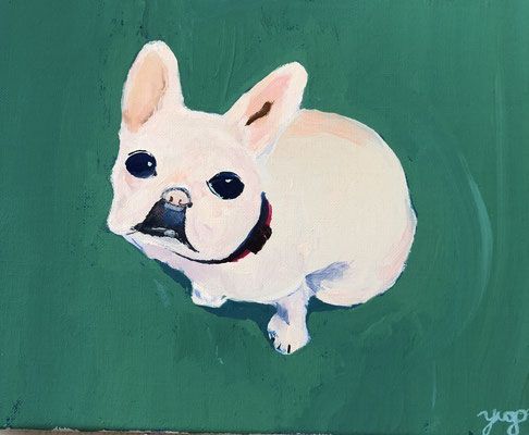 Yugo_Our French bulldog
